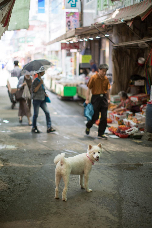 Cute dog (Busan, Korea)