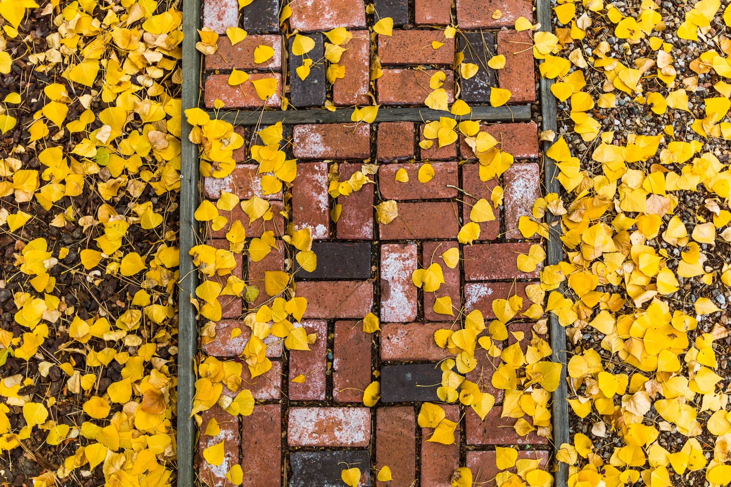 Fall leaves on a brick walkway, at home in Big Bear